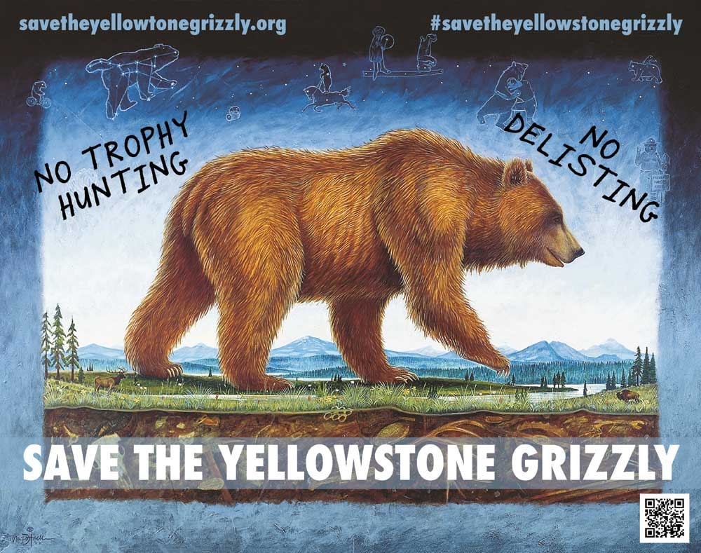 Save the Yellowstone Grizzly Poster Dolack 14x11