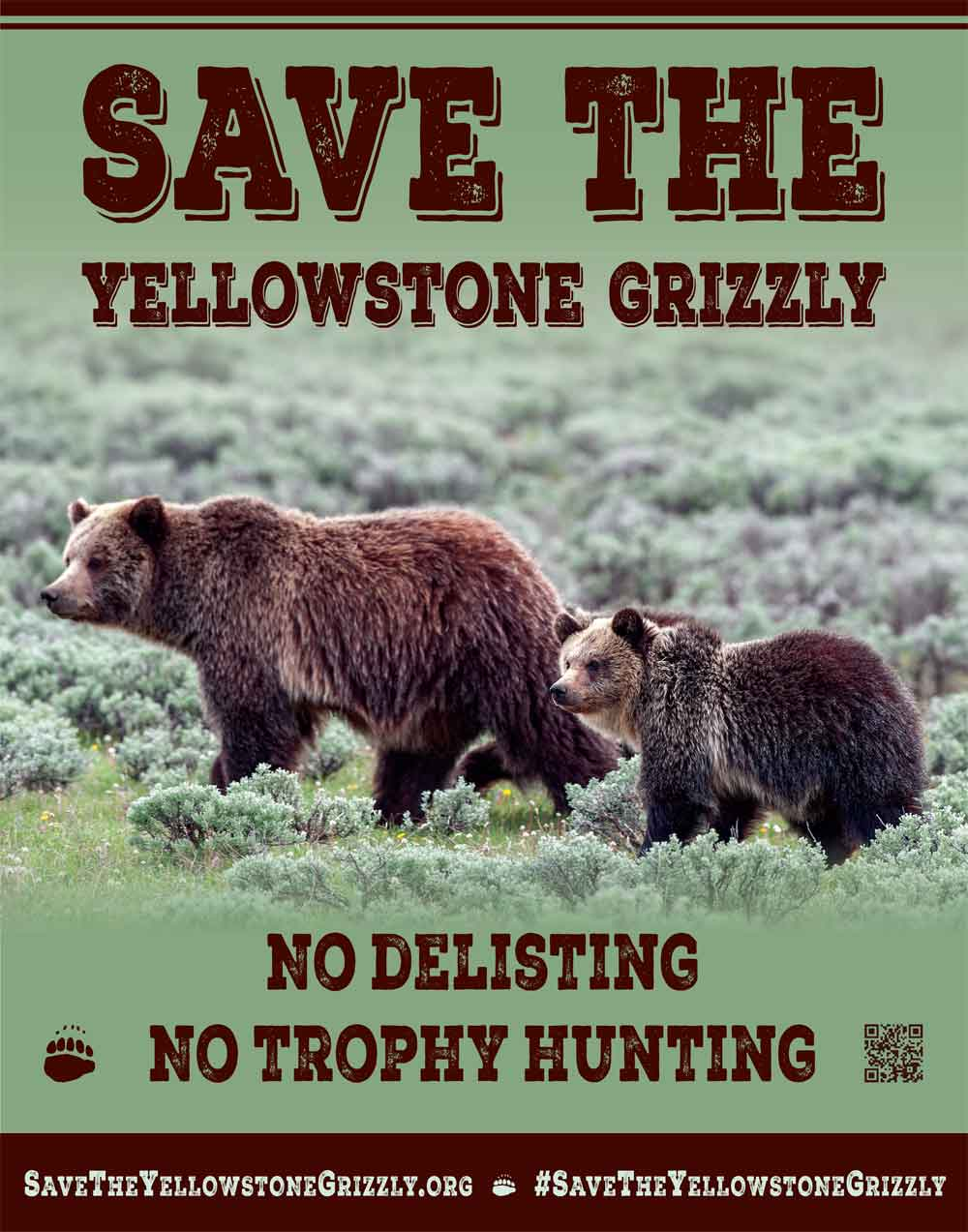 Save the Yellowstone Grizzly Poster Murphy 11x14
